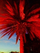 Red Palm Tree